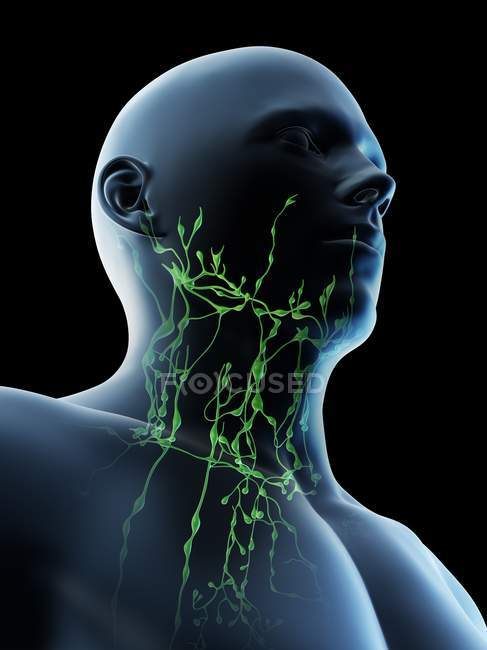Male lymphatic system of neck, digital illustration. — Stock Photo