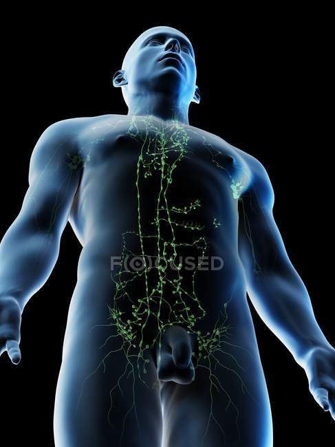 Lymphatic system of male upper body, computer illustration. — Stock Photo