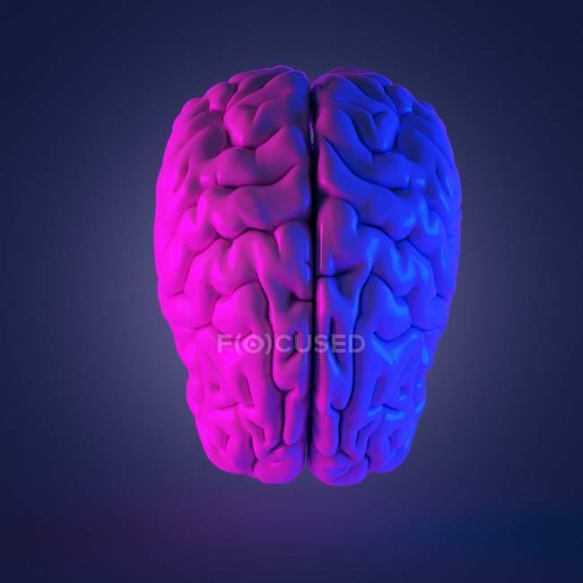 Cerebro humano multicolor abstracto, ilustración por computadora . - foto de stock