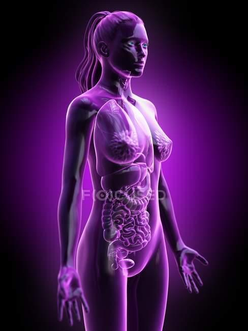 Female body silhouette showing full anatomy, digital illustration. — Stock Photo