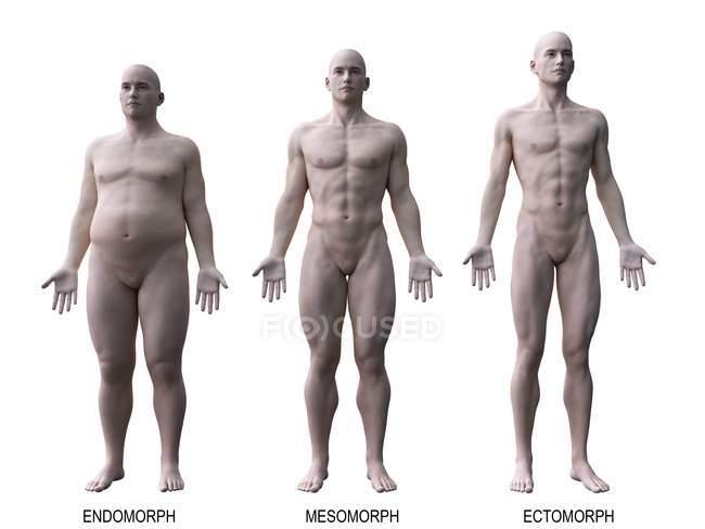Männlich verschiedene Körpertypen, Computerillustration. — Stockfoto