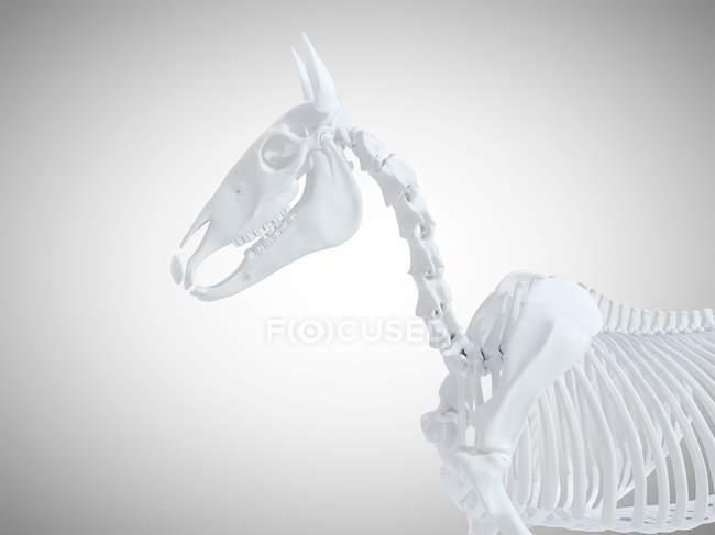 Конский скелет, реалистичный 3D рендеринг . — стоковое фото