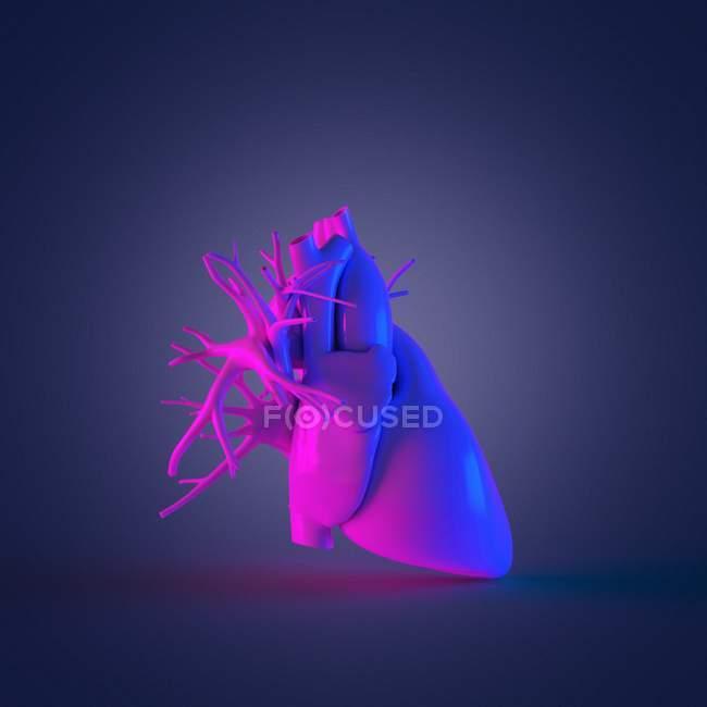 Modelo de corazón humano colorido sobre fondo oscuro, ilustración por computadora . - foto de stock
