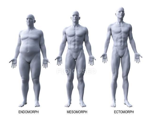 Maschio diversi tipi di corpo, illustrazione del computer . — Foto stock