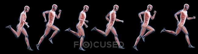 Silhouette de ejecución que muestra anatomía de músculos, ilustración informática.. - foto de stock
