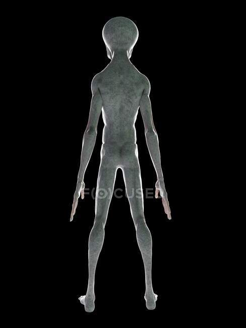 Rear view of grey alien on black background, digital illustration. — Stock Photo