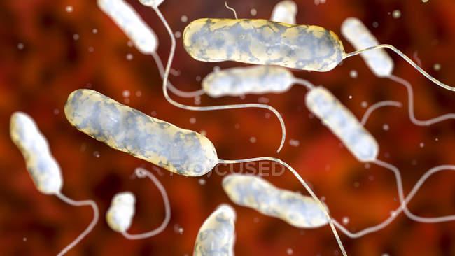 Ilustração digital de bactérias Legionella pneumophila, causa da doença de Legionários . — Fotografia de Stock