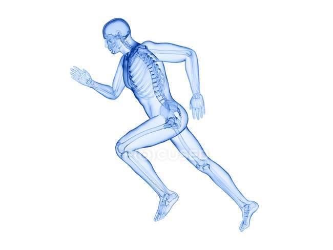 Esqueleto en la silueta del cuerpo del corredor en acción, ilustración por computadora . - foto de stock