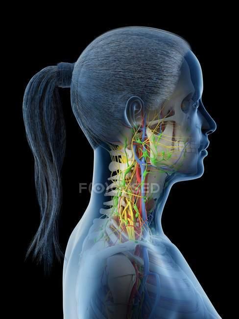 Cuerpo femenino mostrando anatomía del cuello, ilustración por computadora . - foto de stock