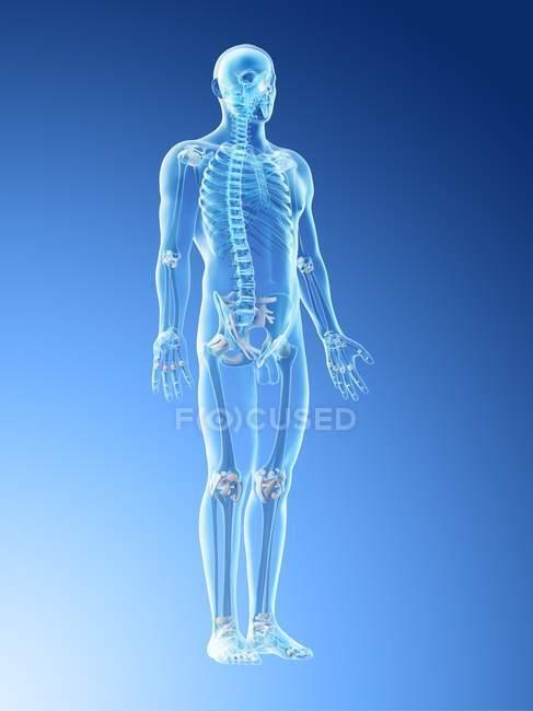 Scheletro maschile e legamenti in corpo trasparente, illustrazione al computer . — Foto stock