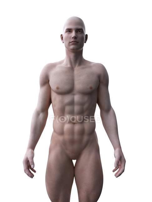 Hombre muscular, ilustración por ordenador . - foto de stock