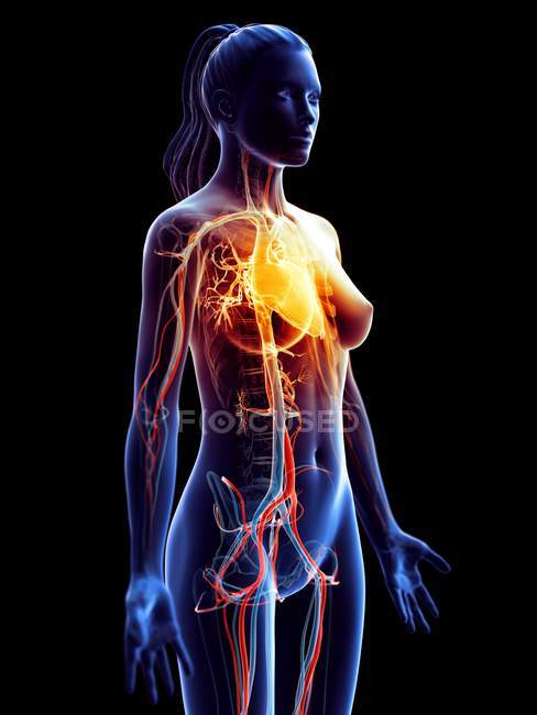 Doença cardíaca no corpo feminino, ilustração digital conceitual . — Fotografia de Stock
