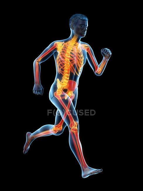 Scheletro di colore arancione del corridore maschio in azione, illustrazione digitale . — Foto stock
