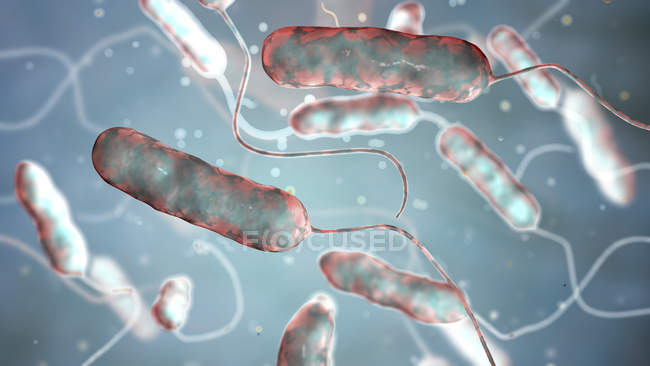 Digital illustration of Legionella pneumophila bacteria, cause of Legionnaires disease. — Stock Photo