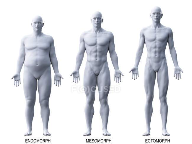 Masculino diferentes tipos de cuerpo, ilustración por ordenador . - foto de stock