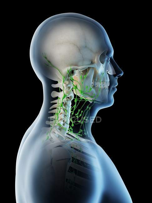 Linfonodi del collo e della testa maschile, illustrazione computerizzata. — Foto stock