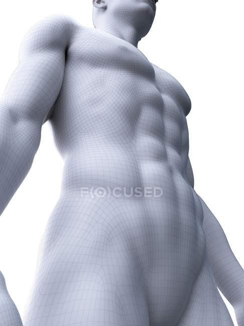 Representación 3d masculina que muestra los músculos abdominales, ilustración por computadora . - foto de stock