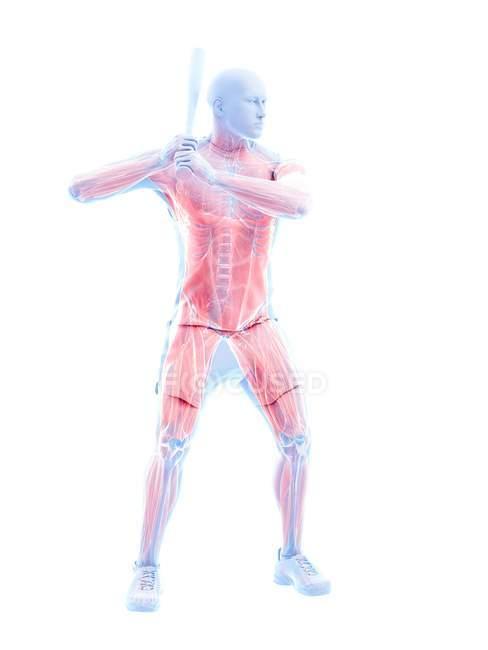 Músculos masculinos del jugador de béisbol mientras sostiene el bate, ilustración del ordenador . - foto de stock