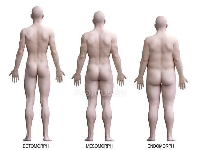 Мужчины с различными типами тела в виде сзади, компьютерная иллюстрация. — стоковое фото