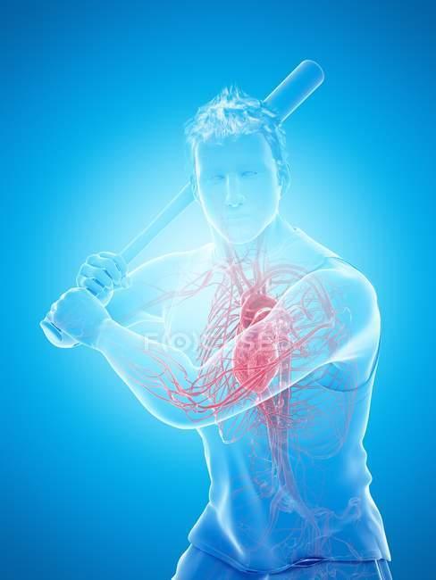 Anatomía del jugador de béisbol con corazón visible, ilustración por computadora . - foto de stock