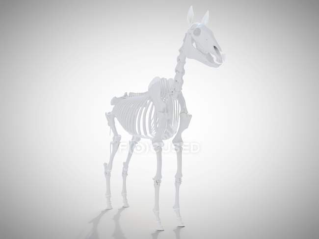 Esqueleto de caballo, representación 3D realista . - foto de stock