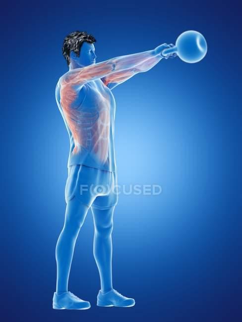 Musculatura del hombre haciendo entrenamiento de kettlebell, ilustración digital conceptual . - foto de stock