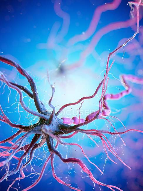 Nerve cell with many dendrites on blue background, digital illustration. — Stock Photo
