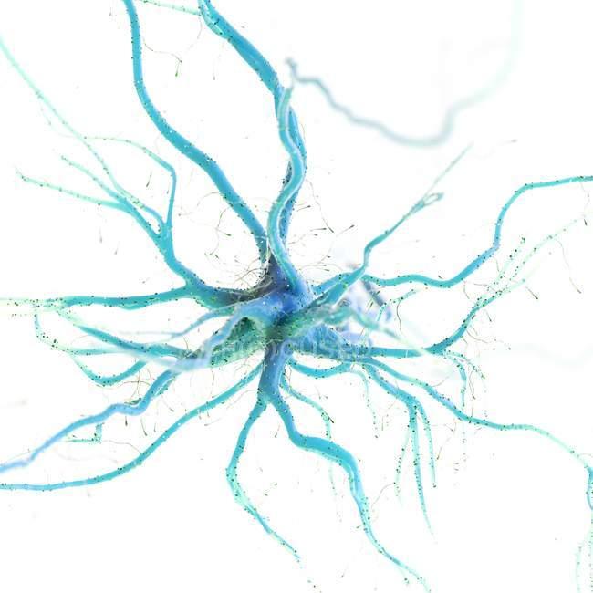 Blue colored nerve cell on white background, digital illustration. — Stock Photo