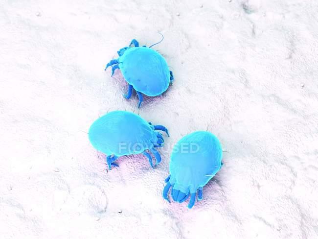 Ilustración digital a color de ácaros parásitos del polvo . - foto de stock