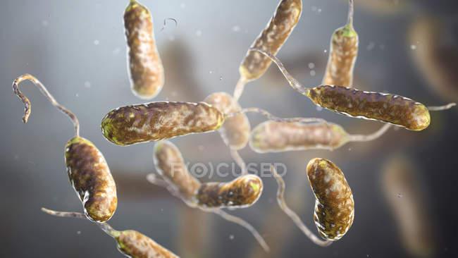 Vibrio vulnificus batteri trovati in acqua di mare, illustrazione computer colorato . — Foto stock
