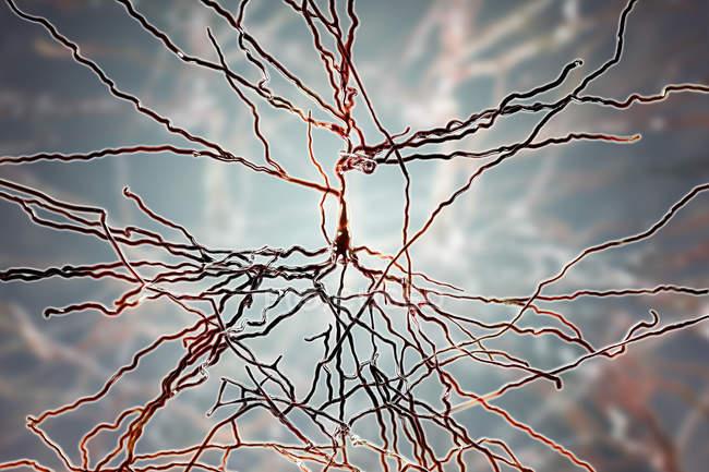 Ilustración digital de las células nerviosas piramidales de la corteza cerebral del cerebro . - foto de stock