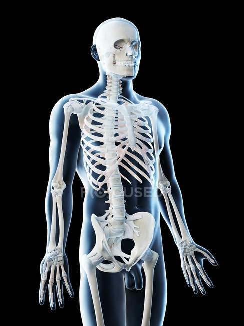 Silhouette maschile con ossa visibili nella parte superiore del corpo, illustrazione al computer . — Foto stock