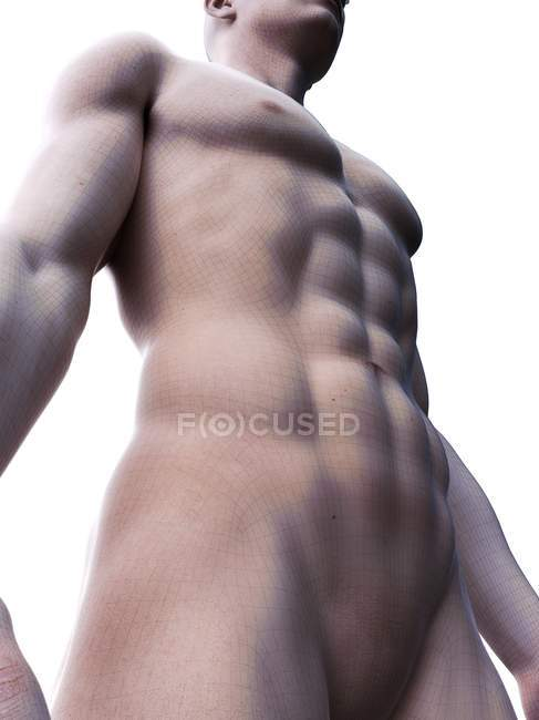 Male 3d rendering showing abdominal abs muscles, computer illustration. — Stock Photo