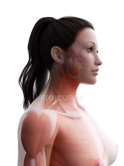 Cuerpo femenino con musculatura visible, ilustración digital . — Stock Photo