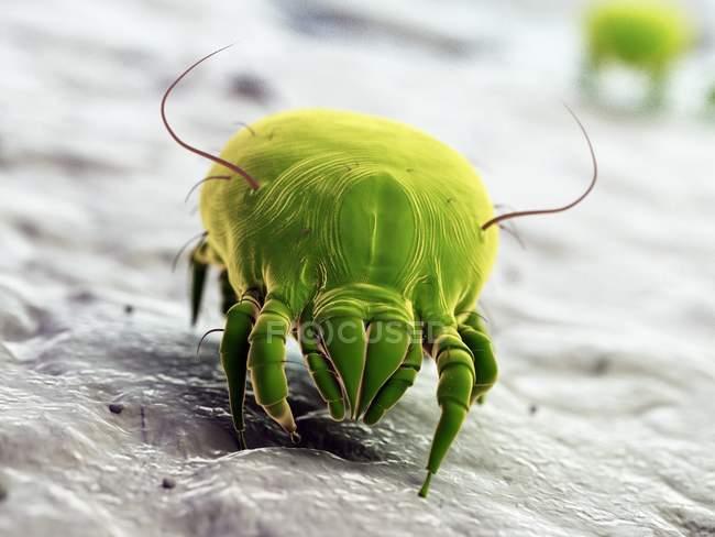 Acarien de poussière coloré vert, illustration numérique. — Photo de stock