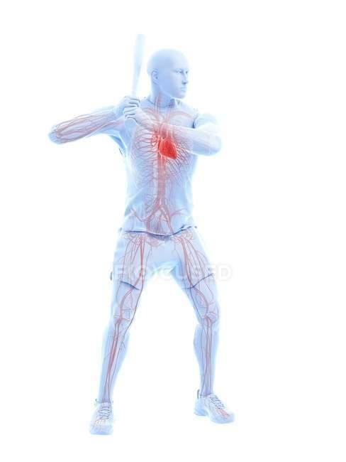 Anatomie du joueur de baseball avec cœur visible, illustration de l'ordinateur . — Photo de stock