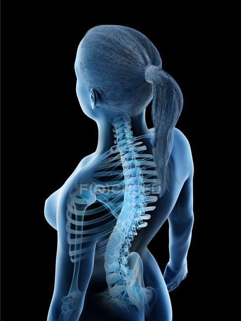 Anatomía y esqueleto de la espalda femenina, ilustración por computadora . - foto de stock