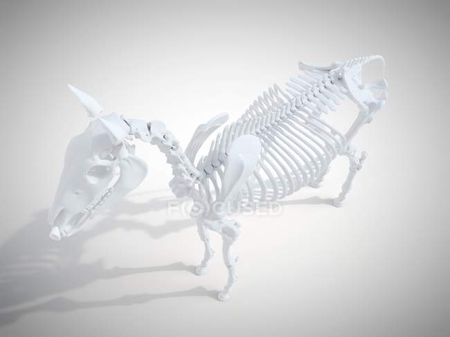 Horse skeleton, realistic 3d rendering. — Stock Photo