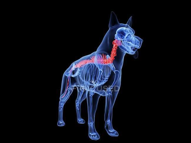 Silueta para perros con lomo de color rojo sobre fondo negro, ilustración digital . - foto de stock