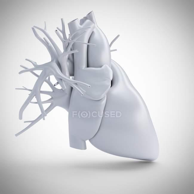 Grey human heart model on white background, computer illustration. — Stock Photo