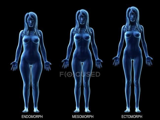 Типы женских тел, концептуальная цифровая иллюстрация. — стоковое фото