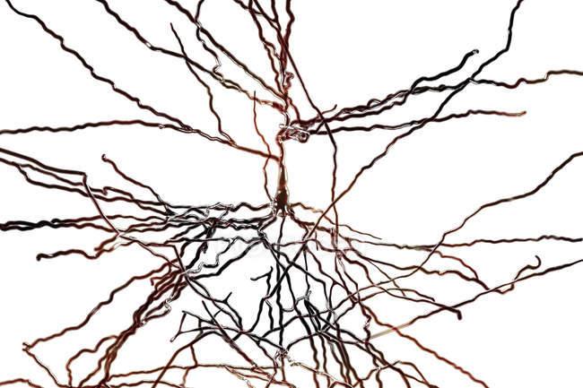 Digital illustration of pyramidal nerve cells from cerebral cortex of brain. — Stock Photo
