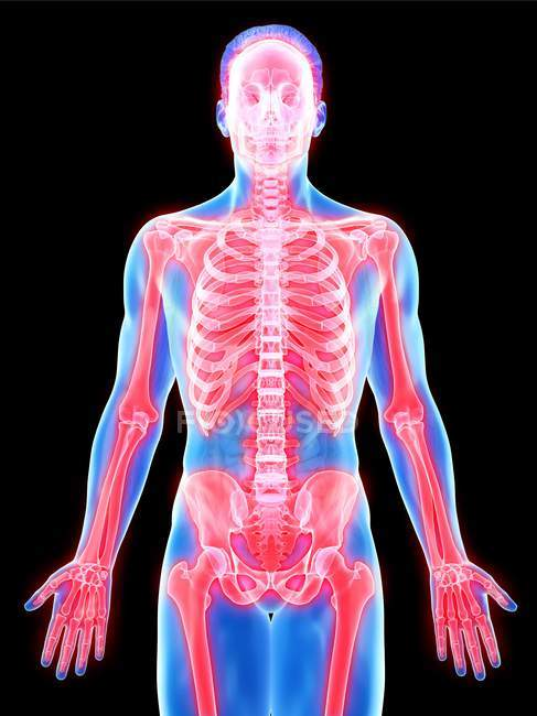 Esqueleto masculino en silueta de cuerpo transparente, ilustración por computadora . - foto de stock