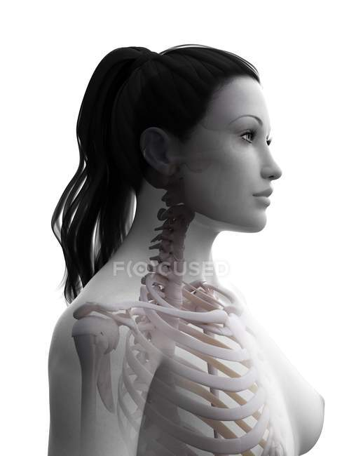 Female body silhouette with visible skeleton, digital illustration. — Stock Photo