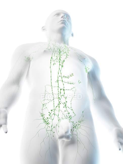 Sistema linfático de la parte superior del cuerpo masculino, ilustración por ordenador . - foto de stock