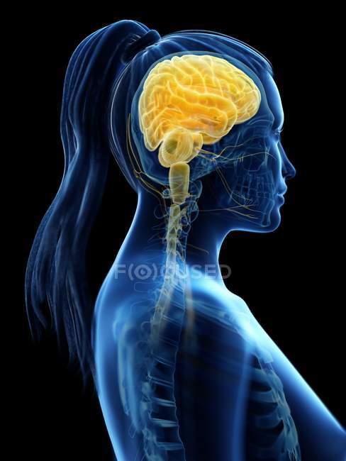 Cérebro colorido no corpo feminino, ilustração computacional . — Fotografia de Stock