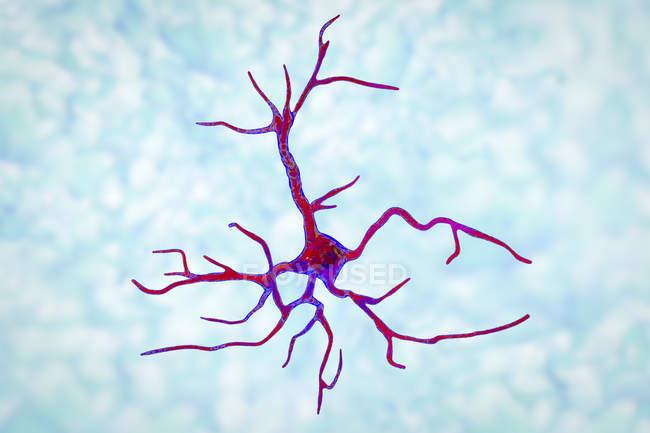 Célula nervosa glial de astrócitos, ilustração digital . — Fotografia de Stock