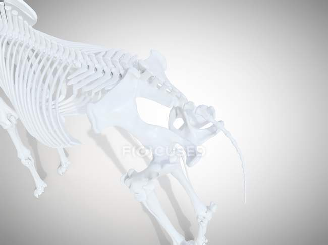 Squelette de cheval, rendu 3D réaliste . — Photo de stock