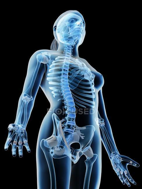Ossa astratte della parte superiore del corpo femminile, illustrazione del computer . — Foto stock