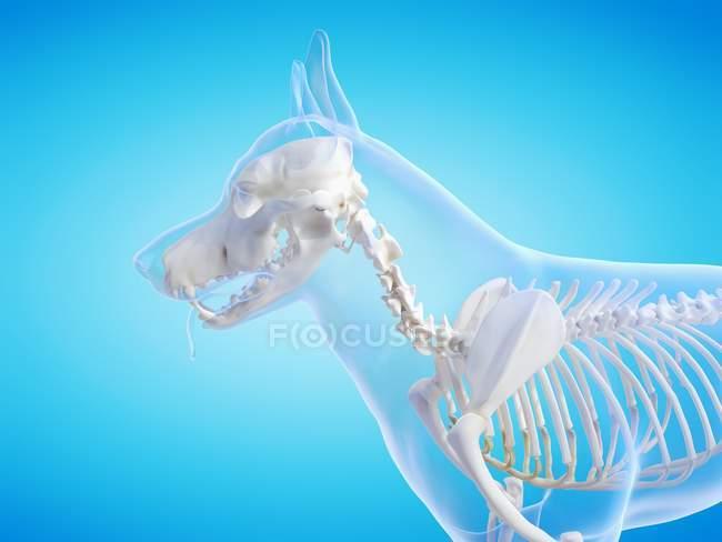 Silhouette de crabot avec le squelette visible sur le fond bleu, illustration numérique. — Photo de stock